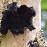 Low-cost oral medication for black fungus