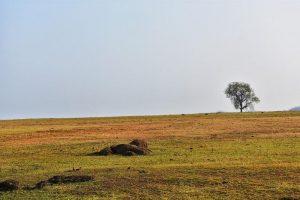 Chhattisgarh to provide ₹6,000 to landless families