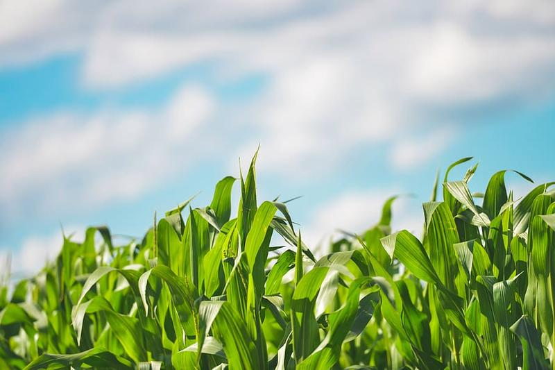 Government extends the deadline for enrolment for crop insurance