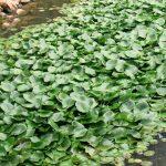 Assam girls make biodegradable yoga mats
