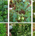 Urban Eco Farms rents farms
