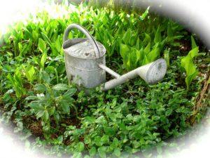 Professor develops IoT based system for watering plants