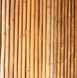 Farmer earns lakhs by cultivating bamboo